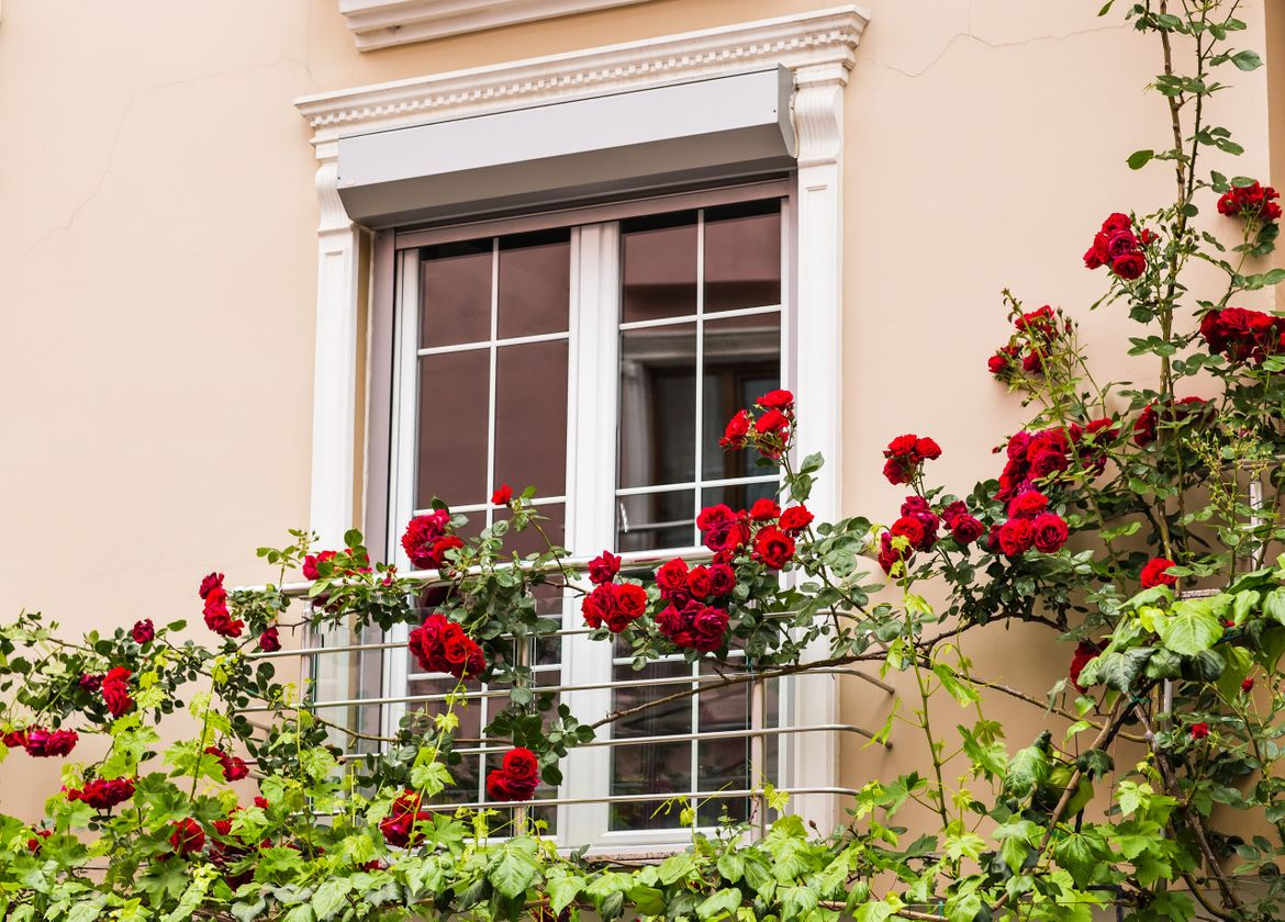 Sash windows experts